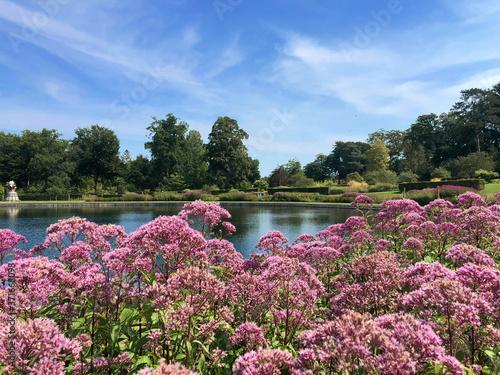 Canvastavla Eupatorium flowers in RHS GARDEN, WISLEY, SURREY/UK
