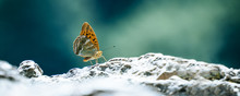 Butterfly Landing On A Rock