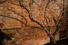 Sunlit Garden Wall