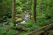Flowing Stream In The Woods