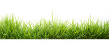 Green Grass In Garden Isolate ...