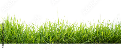 Fotografía green grass in garden isolate on white background