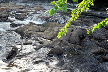 Rocks In Flowing Creek With Overhanging Branches With Green Leaves