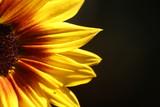 Fototapeta Na ścianę - Flowers