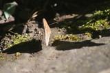 Fototapeta Na ścianę - Butterfly on floor