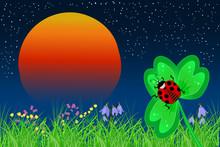 Ladybird On The Leaf On A Suns...