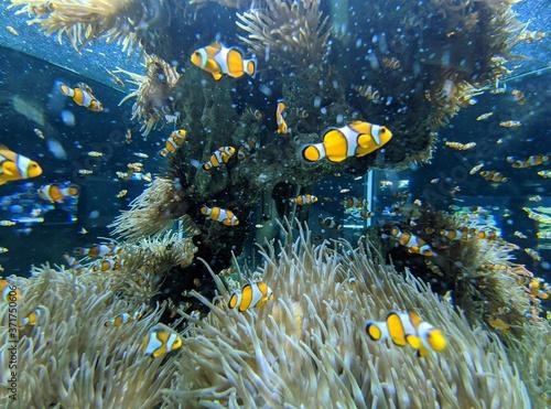 Musée océanographique de Monaco monte Carlo, poissons Némo, crabe méduse requin Fototapet