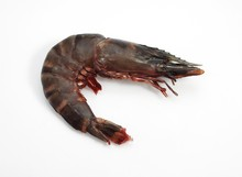Fresh Mediterranean Praw Or Gambas Against White Background