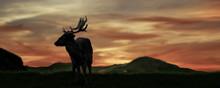 Silhouette Of A Deer In Summer Season Sunset.