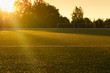 canvas print picture - An empty soccer field in the sun