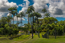 Tall And Majestic Royal Palm T...