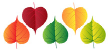 Vector Colorful Autumn Falling Leaves - Design Elements
