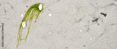 Sand on the coast line of baltic sea Fototapet