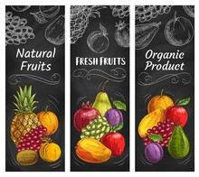 Fruits Sketch Banners, Tropica...
