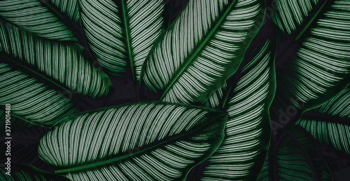 tropical leaves, abstract green leaves texture, nature background Billede på lærred