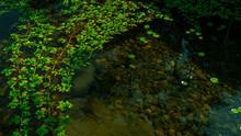 池と水辺の植物と湿地...