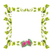 Caladium, Epipremnum Tropical Floral Flower Leaf Template Frame Watercolor Painting Illustration Design Card Background Wedding Invitation Decoration Art Pattern