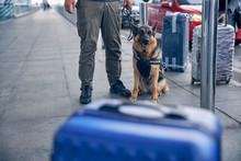 German Shepherd Dog Sitting Be...