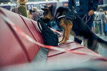 Officer And Detection Dog Checking Suspicious Backpack At Airport