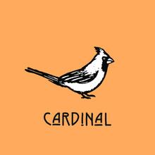 Hand Drawn Illustration In Retro Vintage Style. Cardinal Bird.