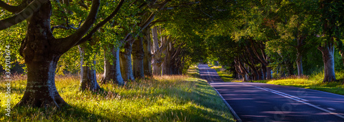 Beech Tree Avenue Near Wimborne in Dorset Fototapeta