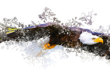 Bald Eagle Swoop Landing Hand Draw And Paint On White Background Illustration
