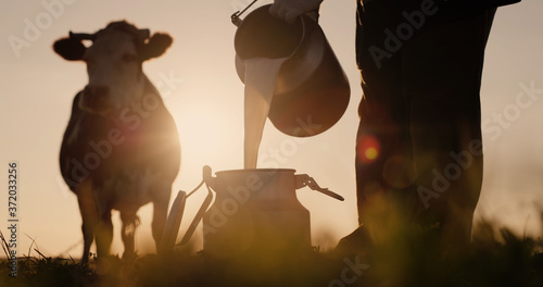 Farmer pours milk into can at sunset, in the background of a meadow with a cow Fototapeta