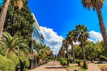Luxury Real Estate Under Palm ...
