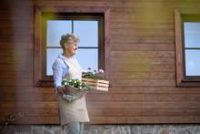 Senior Woman Gardening In Summ...