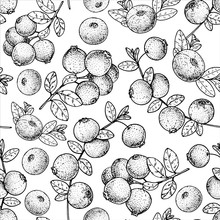Seamless Pattern With Cranberry. Hand Drawn Sketch. Black And White Style Illustration. Vector Illustration. Cranberries Background.