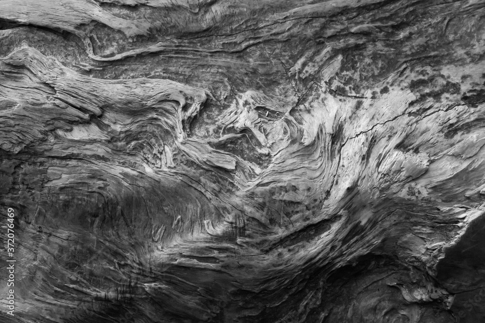 Fototapeta Abstraction in Redwood Trees