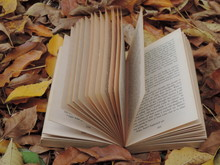Open Book With Autumn Leaves