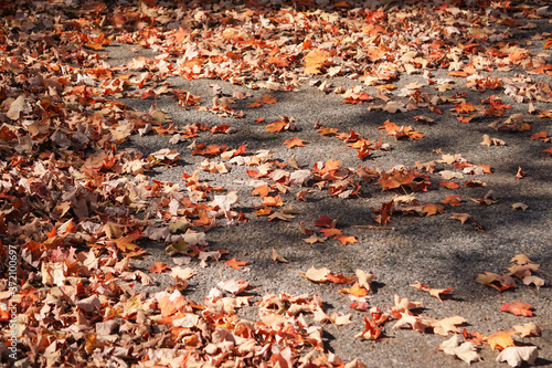autumn leaves on the ground Fototapeta