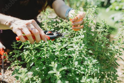 Photographie Hand pruning garden
