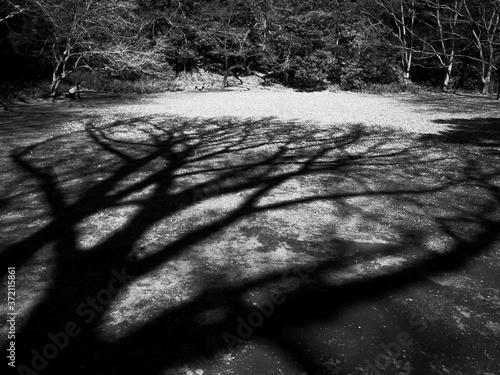 Fototapeta 巨大な影 白黒