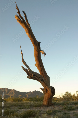 Photo Landscape in the golden hour of California desert , with a dead tree still reaching to the sky