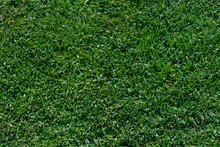 Closeup Of A Section Of A Lush Emerald Green Lawn Of Dwarf St Augustine Grass Showing The Dense Pattern And Texture Of A Healthy Lawn