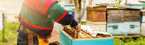 Beekeeper is working with bees and beehives on the apiary Fototapeta