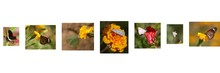 Different Types Of Butterflies And Moths Sitting On Marigold Flowers