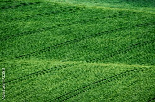 Obraz na plátně Green grass field background
