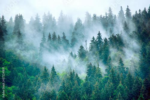 Papel de parede Misty mountain landscape