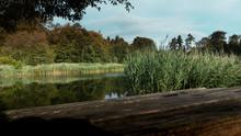 Stanton Lake Bench View