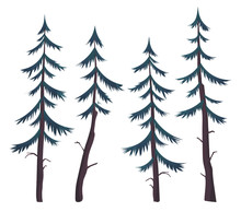 Set Of Vector Images Of Pines ...