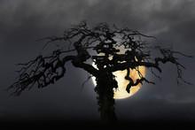 Spooky Bare Tree On Moody Sky ...