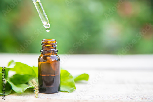Plantain extract in a small bottle. Selective focus. Wallpaper Mural