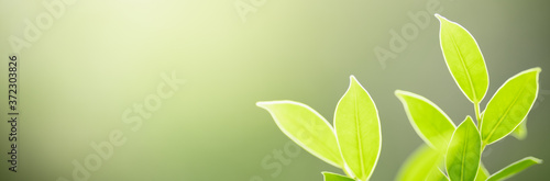 Fotografiet Closeup beautiful attractive nature view of green leaf on blurred greenery background in garden with copy space using as background natural green plants landscape, ecology, fresh cover page concept