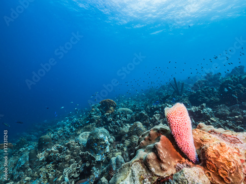 Photo Seascape in turquoise water of coral reef in Caribbean Sea / Curacao with fish,