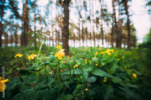 Photo Green Spring Forest
