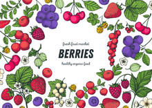 Berries Drawing Collection. Ha...