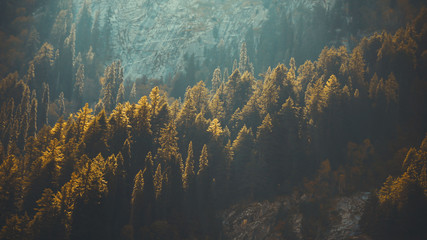kumrat forest